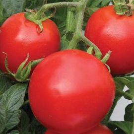 Кемпбел семпена томата дет. окр. раннего 70-80 дн. (Hortus)