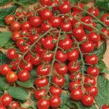 Мини семена томата индет. черри (Semo)