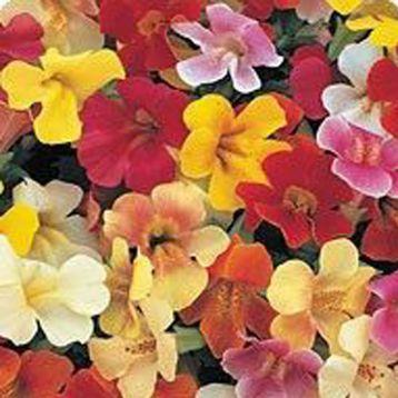 Гавайи Formula mix семена губастика дражированные (Kitano Seeds)