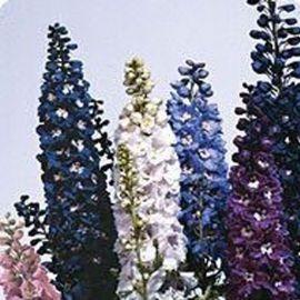 Икебана Crystal mix семена дельфиниума альпийского (Kitano Seeds) НЕТ СЕМЯН