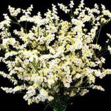 Лимониум белый (white) семена однол. 50см (Moravoseed)