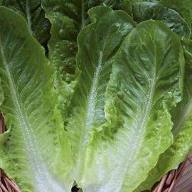 Бионда Монтаре семена салата типа Ромэн зел. (Hortus)
