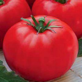 Леди Совершенство семена томата дет. (Euroseed)