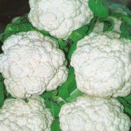 Палла ди Неве семена капусты цветной (SAIS)