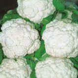 Палла ди Неве семена капусты цветной ранней 1,5 кг (SAIS)