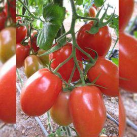 Рома семена томата дет. (Euroseed)