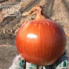 Голд Стар семена лука репчатого среднепозднего 120-125дн 120-130г (Erste Zaden) НЕТ ТОВАРА