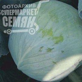 Грин Кроун F1 семена капусты б/к ультраранней 50 дн. 1-1,5 кг окр. (Erste Zaden) НЕТ ТОВАРА
