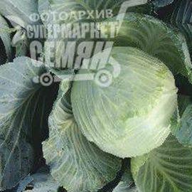 Грин Стар F1 семена капусты б/к среднепоздний 90-100 дней 4-5 кг (Erste Zaden) НЕТ ТОВАРА