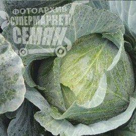 Джеди Грин F1 семена капусты б/к ранней 70-80 дн. 1,5-2 кг (Erste Zaden) НЕТ ТОВАРА