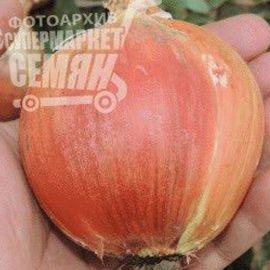 Отаман F1 семена лука репчатого среднего 100дн (Erste Zaden) НЕТ ТОВАРА