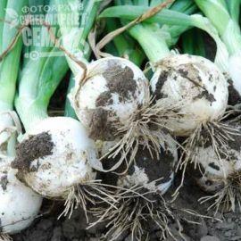 Вайт Меджик F1 семена лука репчатого поздн. 110-115дн. дл. дня белого (United Genetics)