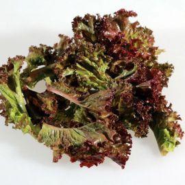 Андромеда семена салата тип Батавия (Гавриш) НЕТ
