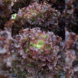 салат гранд рапидс барбадос