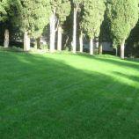 Газонная трава Засухоустойчивая (DLF Trifolium)
