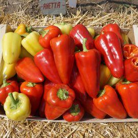 Анетта F1 семена перца сладкого ультраранний (Enza Zaden)