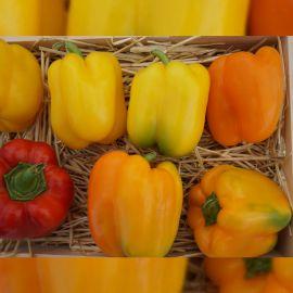 Магно F1 семена перца сладкого тип Блочный раннего корот.куб. 190-220гр. 4-х камер. 5-6мм зел./оранж. (Enza Zaden)