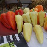 Немезис F1 семена перца сладкого (Enza Zaden)