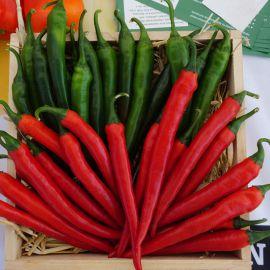 Хайфи F1 семена перца горького раннего удлинен. 15х2 см зел./красн. (Enza Zaden)