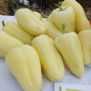 Хаски F1 семена перца сладкого (Enza Zaden)