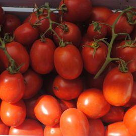 Эдвайзер F1 семена томата дет. раннего слив. 75 гр. (Esasem)