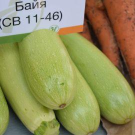 Байя F1 (СВ 1146 F1, Адриель F1, Лена F1) семена кабачка ультрараннего 25-27дн. светло-зеленого (Vilmorin)