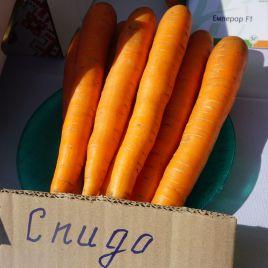 Спидо F1 семена моркови Нантес ранней 80-90 дн. (Vilmorin)