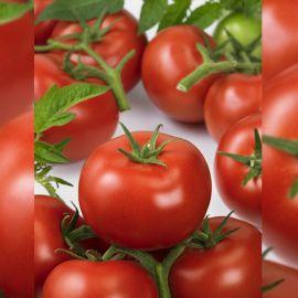 Ронда F1 (Ronda F1) семена томата индет. раннего 63-67 дн. плос.-окр. 180-225г (Ergon seeds)