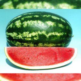 Цицерио F1 (Cicerio F1) семена арбуза тип Кримсон Свит среднего 80-85дн 9-11кг овал 97-12% (Ergon seeds)