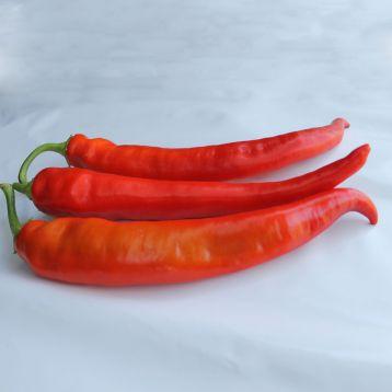 ЕС 8716 F1 (ЕS 8716 F1) семена перца острого 80-85 дн. 80-110 гр. 18х3 см св.-зел./красн. (Ergon seeds)