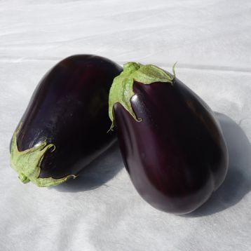Сара F1 (Sara F1) семена баклажана тип Клоринда раннего 83-90 дн. 1200 г 25 см овал. (Cora Seeds)