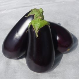 Джокер F1 (CRX 50125 F1) семена баклажана тип Эпик раннего 75-80 дн. 450-500 гр. 20 см удл. (Cora Seeds)