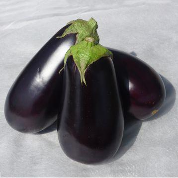 Джокер F1 (CRX 50125 F1) семена баклажана тип Эпик раннего 75-80 дн. 450-500 гр. 20 см овал. (Cora Seeds)