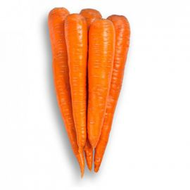 Вармия F1 (1,8-2,0) семена моркови Флакке поздней 150-160 дн. (Rijk Zwaan)
