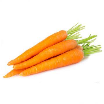 Шугаснекс 54 F1 (18-20) семена моркови тип Император ранней (Nunhems)