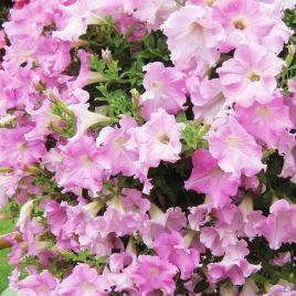 Даймонд Жемчуг Шейдз F1 светло-фиолетовая семена петунии дражированные (Cerny СДБ)