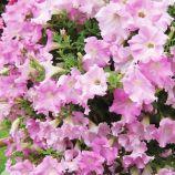 Петуния Даймонд Жемчуг (Перли) Шейдз F1 светло-фиолетовая