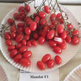 Мандат F1 семена томата дет. черри раннего 100-105 дн. слив. 10-15 гр. (Moravoseed)