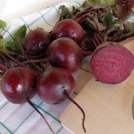 Моника семена свеклы столовой (Moravoseed)