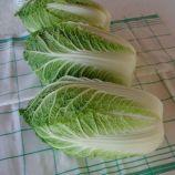 Гилтон семена капуста пеканской (Moravoseed)