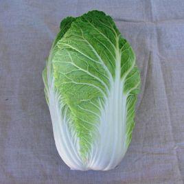 Форко F1 (Форсо F1) семена капусты пекинской ранней 55-65 дн. 1,2-1,5 кг (Moravoseed)