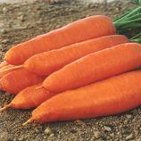 Корина семена моркови Нантес/Шантане (Moravoseed)