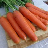 Анета F1 семена моркови Нантес (Moravoseed)