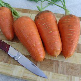 Катрин (Талисман) семена моркови Шантане среднепоздней 125-130 дн (Moravoseed)