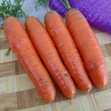 Фаворит F1 семена моркови Нантес поздний (Moravoseed)