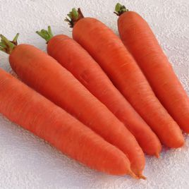 Цидера семена моркови Нантес (Moravoseed)