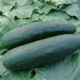 семена огурца обелиск f1