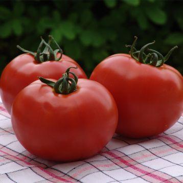 Атерон F1 семена томата индет. среднепоздний 120-130 дн. окр. 170-180 гр красный (Moravoseed)