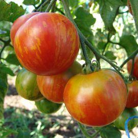 Дуо семмена томата индет. полосатого (Moravoseed)