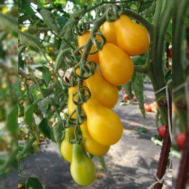 Перун семена томата индет. черри среднего 110-120 дн. груш. 20 гр. желт. (Moravoseed)